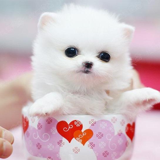 Puppy daily life TikTok