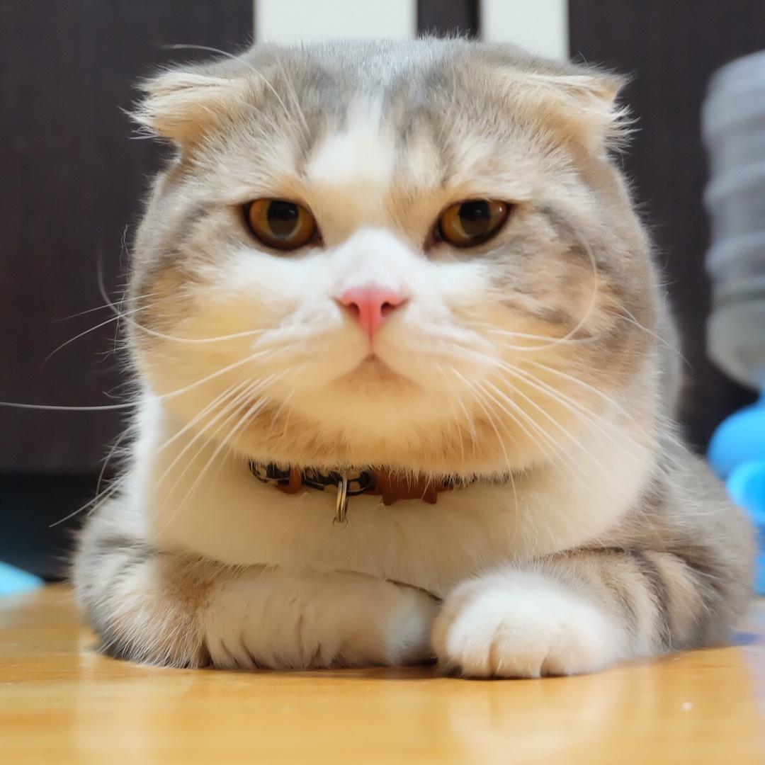 เจ้านายแมวบ้า TikTok