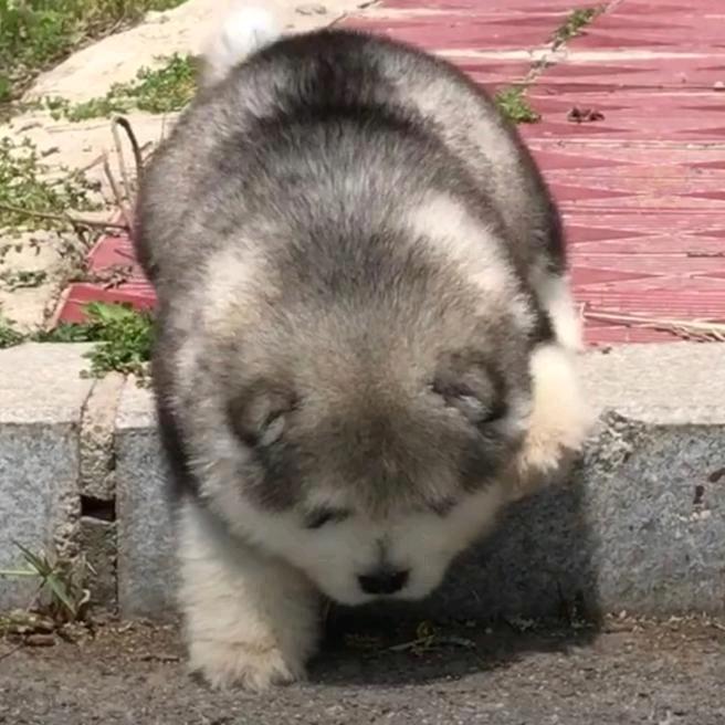 puppy love us TikTok