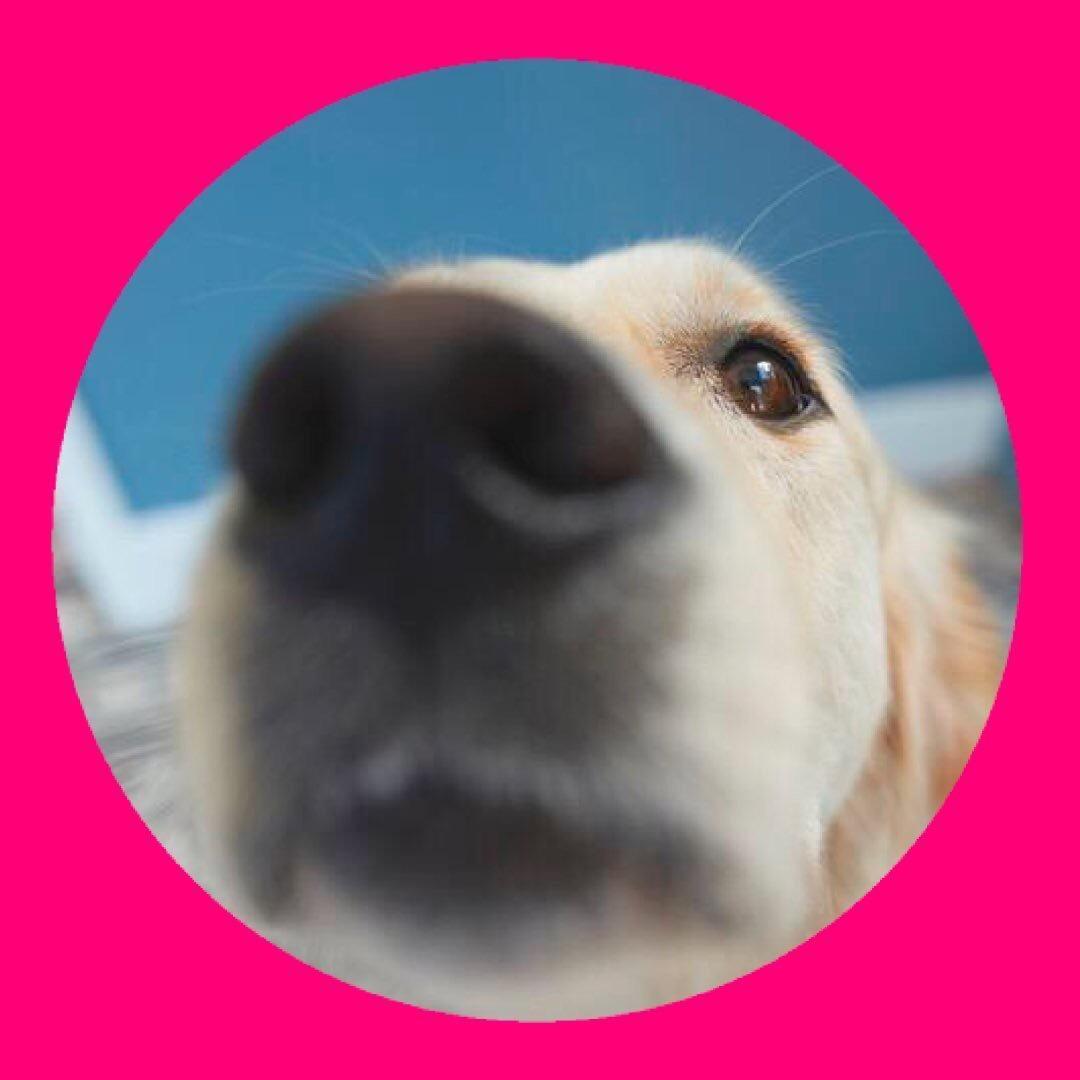 daily dog love ❤️ TikTok