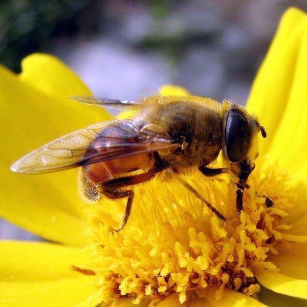 HoneyHunter TikTok