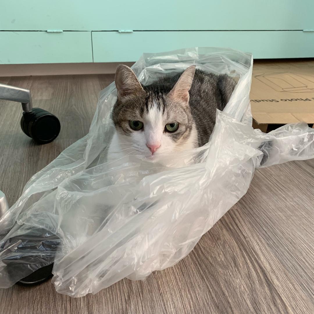 貓貓CATiSS TikTok