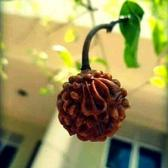 ♥️.......SHIVAM,...♥ TikTok