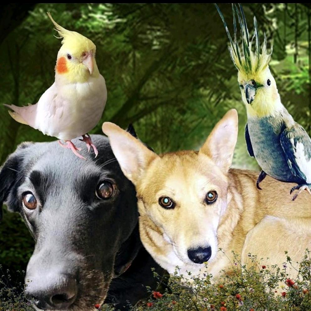 Dogs & Birds TikTok