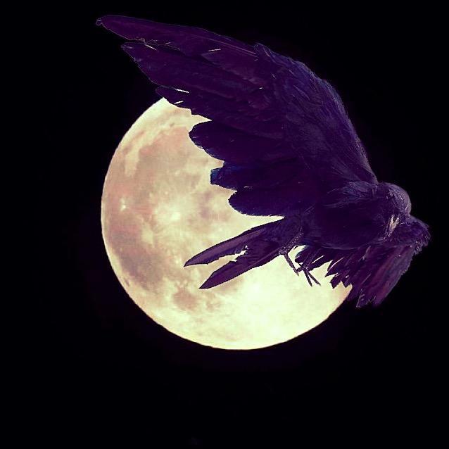 🌙 🔮 Moon Crow Mystic 🔮🌙 TikTok