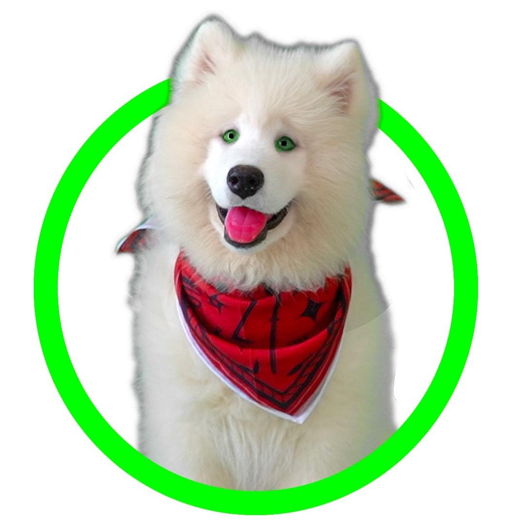 Spy Ninja Dog (Chad Wild Clay) TikTok