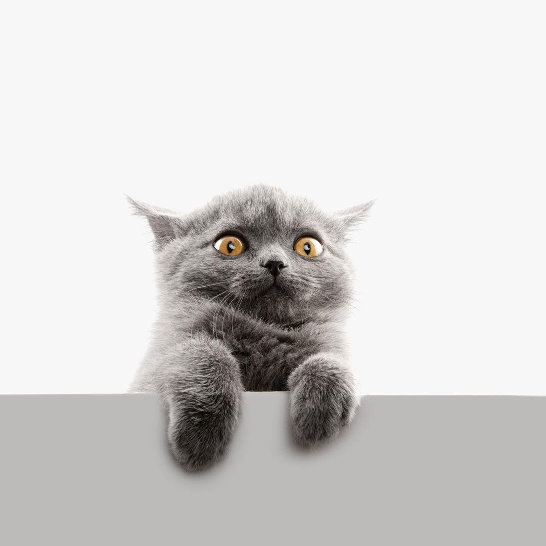 Sang Kucing TikTok