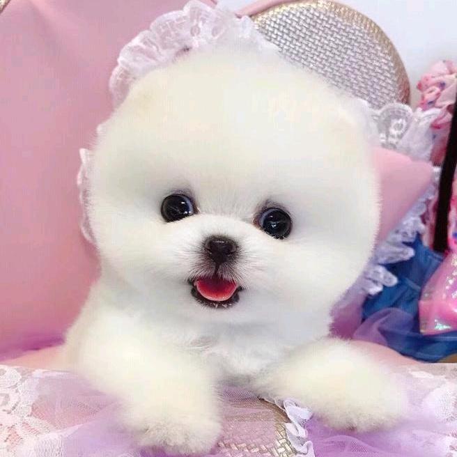 pipi.puppy TikTok