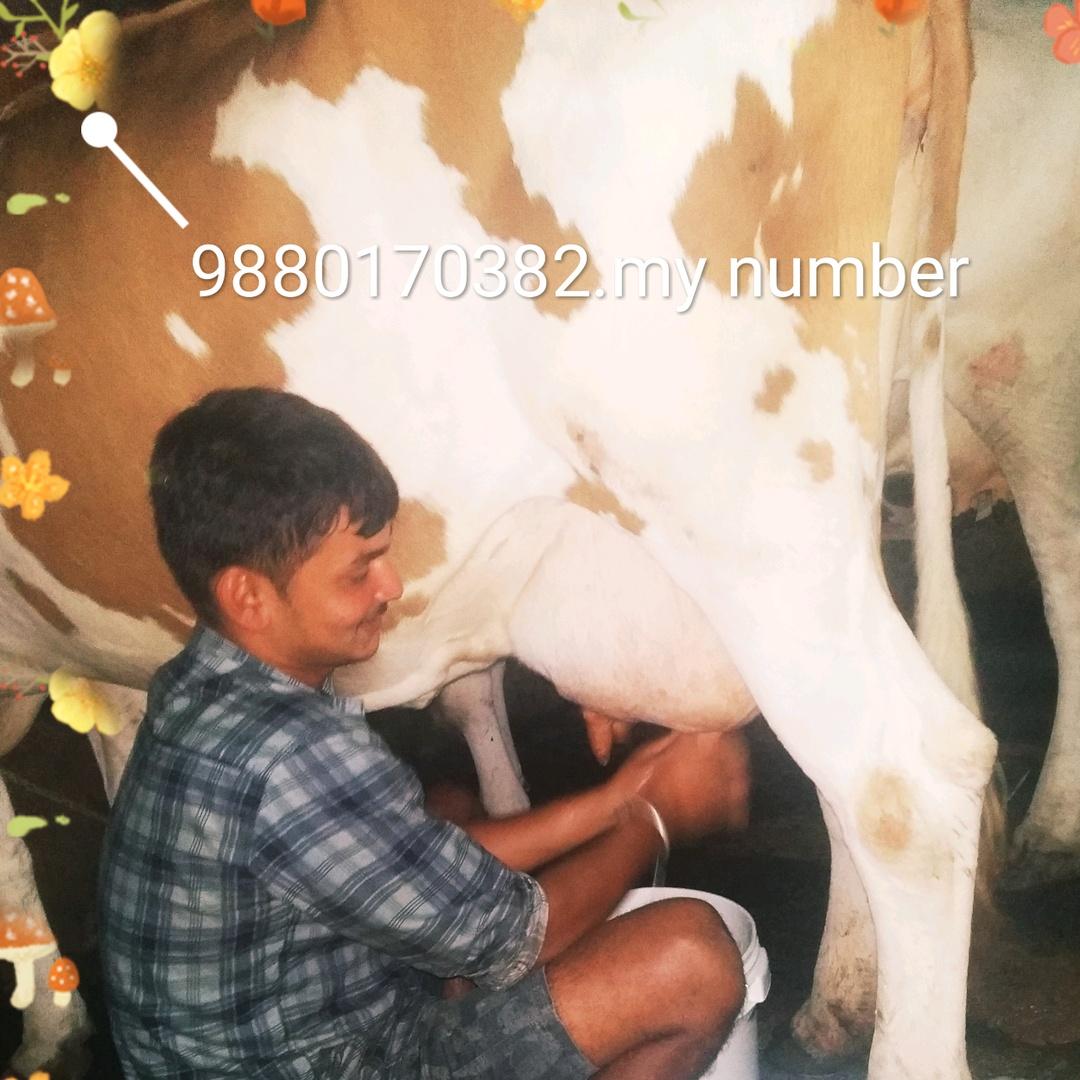 cow boy Kushal 🐄🐄 TikTok