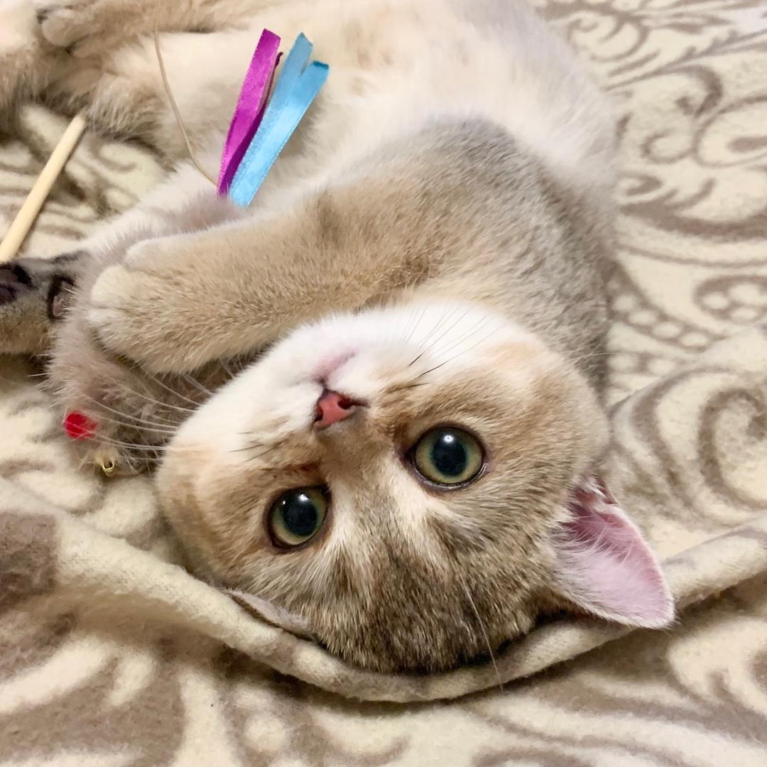 little_shine_cat TikTok